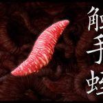 [RJ198208] 触手蛭