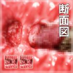 [RJ200844] Sectional View of Vaginal for Haru