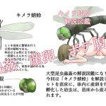 キメラ蜻蛉 解説図鑑 [RJ257861][てるてるがーる]