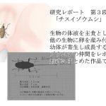 研究レポート チスイゾウムシ編 [RJ263689][てるてるがーる]
